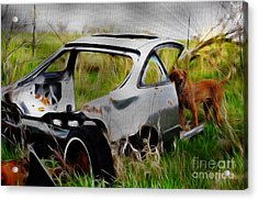 Search And Rescue Acrylic Print by Liane Wright