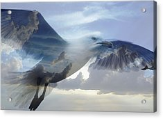 Searching The Sea - Seagull Art By Sharon Cummings Acrylic Print by Sharon Cummings