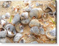 Seashell 01 Acrylic Print