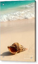 Seashell And Ocean Wave Acrylic Print