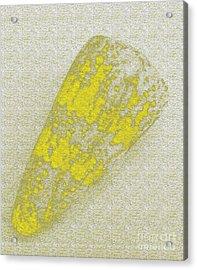 Seashell Acrylic Print by Carol Lynch