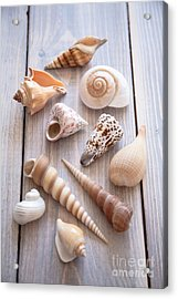 Acrylic Print featuring the photograph Seashell Collection by Jan Bickerton