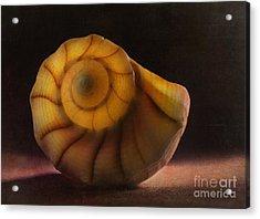 Seashell Acrylic Print by Elena Nosyreva