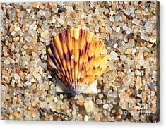 Seashell On Sandy Beach Acrylic Print by Carol Groenen