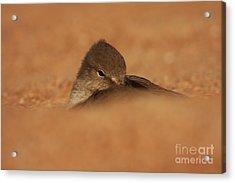 Acrylic Print featuring the photograph Seashell Solitude by John F Tsumas