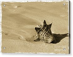 Seashell Acrylic Print by Sophie Vigneault