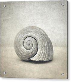 Seashell Acrylic Print by Taylan Apukovska