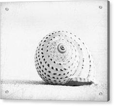 Seashell Voices Acrylic Print