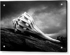 Seashell Without The Sea Acrylic Print by Bob Orsillo