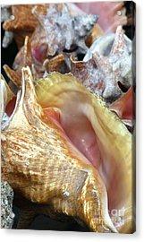 Seashells 2 Acrylic Print by Sophie Vigneault