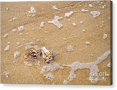 Seashells And Bubbles Acrylic Print by Kaye Menner