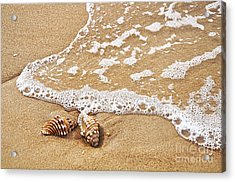 Seashells And Lace Acrylic Print by Kaye Menner
