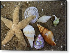 Seashells And Star Fish Acrylic Print