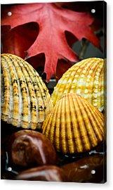 Seashells II Acrylic Print
