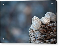 Seashells On Driftwood  Acrylic Print by Brian Boudreau