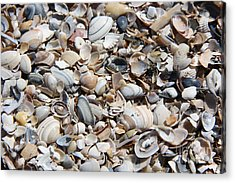 Seashells On The Beach Acrylic Print