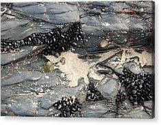 Seashells On The Seashore Acrylic Print by Elijah  Montecelli