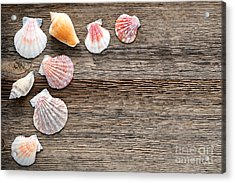 Seashells On Wood Acrylic Print by Olivier Le Queinec