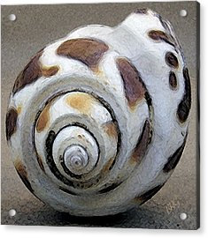 Seashells Spectacular No 2 Acrylic Print by Ben and Raisa Gertsberg