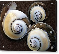 Seashells Spectacular No 23 Acrylic Print by Ben and Raisa Gertsberg