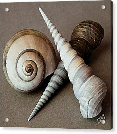 Seashells Spectacular No 24 Acrylic Print by Ben and Raisa Gertsberg