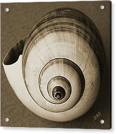 Acrylic Print featuring the photograph Seashells Spectacular No 25 by Ben and Raisa Gertsberg