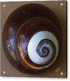 Acrylic Print featuring the photograph Seashells Spectacular No 26 by Ben and Raisa Gertsberg