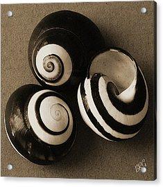 Seashells Spectacular No 27 Acrylic Print