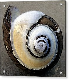 Seashells Spectacular No 3 Acrylic Print by Ben and Raisa Gertsberg
