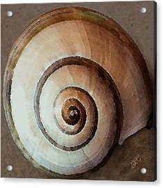 Seashells Spectacular No 34 Acrylic Print by Ben and Raisa Gertsberg