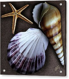 Seashells Spectacular No 37 Acrylic Print by Ben and Raisa Gertsberg
