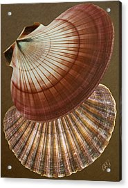 Acrylic Print featuring the photograph Seashells Spectacular No 53 by Ben and Raisa Gertsberg
