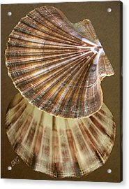 Seashells Spectacular No 54 Acrylic Print by Ben and Raisa Gertsberg