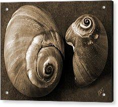 Seashells Spectacular No 6 Acrylic Print