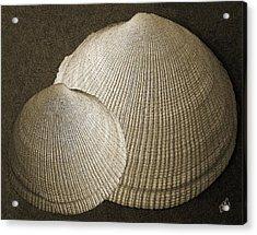 Seashells Spectacular No 8 Acrylic Print