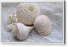 Seashells Study 1 Acrylic Print by Danielle  Parent