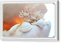 Seashells Study 3 Acrylic Print by Danielle  Parent