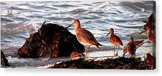 Seaside Diner Acrylic Print by Will Boutin Photos