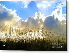 Seaside Grass And Clouds Acrylic Print