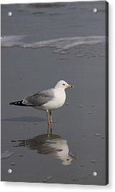 Seaside Sentinel Acrylic Print