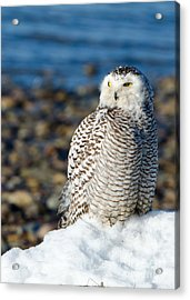 Acrylic Print featuring the photograph Winter At The Beach by Stephen Flint