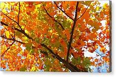 Season Of Change Acrylic Print by Scott Cameron