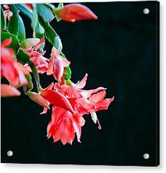 Seasonal Bloom Acrylic Print
