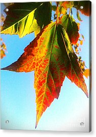 Season's Change Acrylic Print by James Aiken