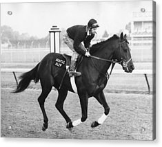 Seattle Slew Horse Racing #03 Acrylic Print