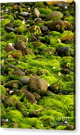 Seaweed And Rocks 2 Acrylic Print