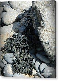 Seaweed And Rocks  Acrylic Print
