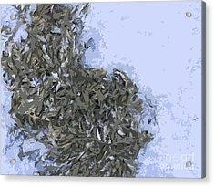 Seaweed Acrylic Print by Carol Lynch