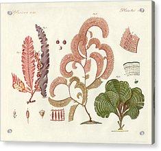 Seaweed Different Kinds Acrylic Print by Splendid Art Prints
