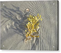 Seaweed Sand Acrylic Print